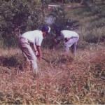 Weeding Clearing